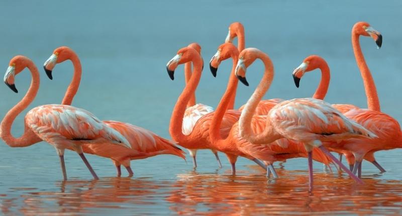 Почему фламинго розового цве…