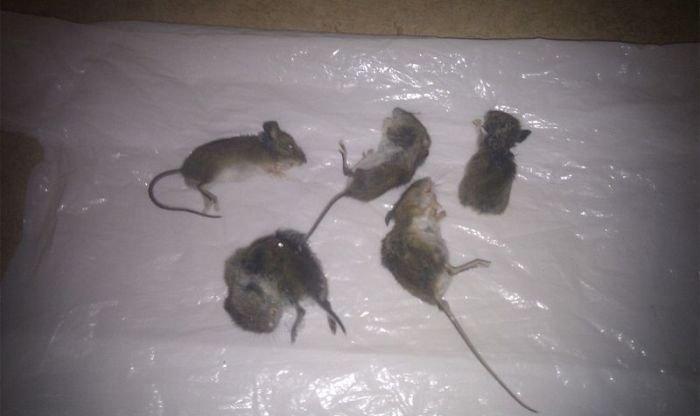 Подарки от котэ кот, мыши, щедрость