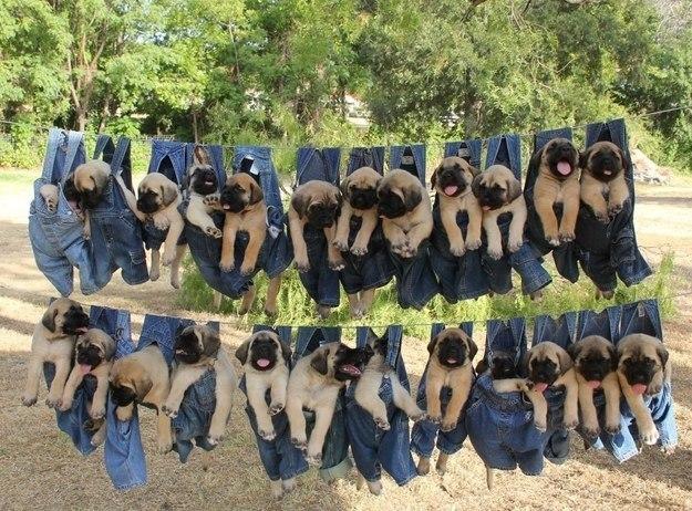 самые милые щеночки в мире (39)