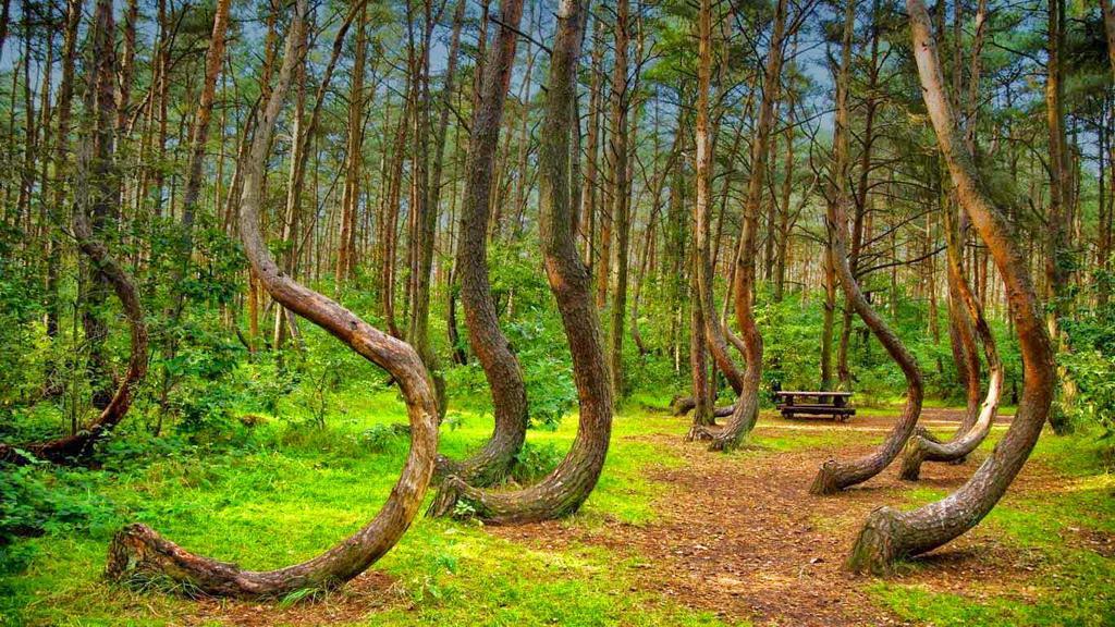 Топ 10 самых красивых лесов на планете
