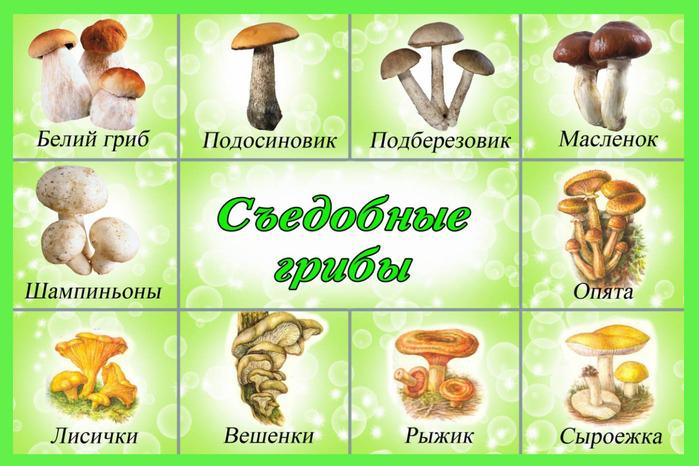 какие грибы есть фото