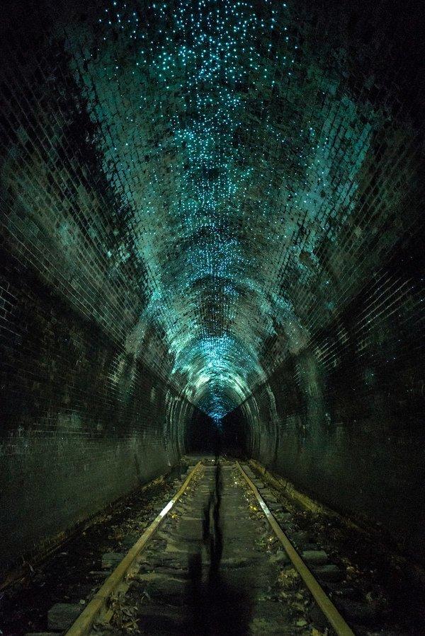 Его еще называют тоннелем светляков - гони во множестве селятся на потолке заброшенного строения интересное, красота, тоннели, удивительное, факты
