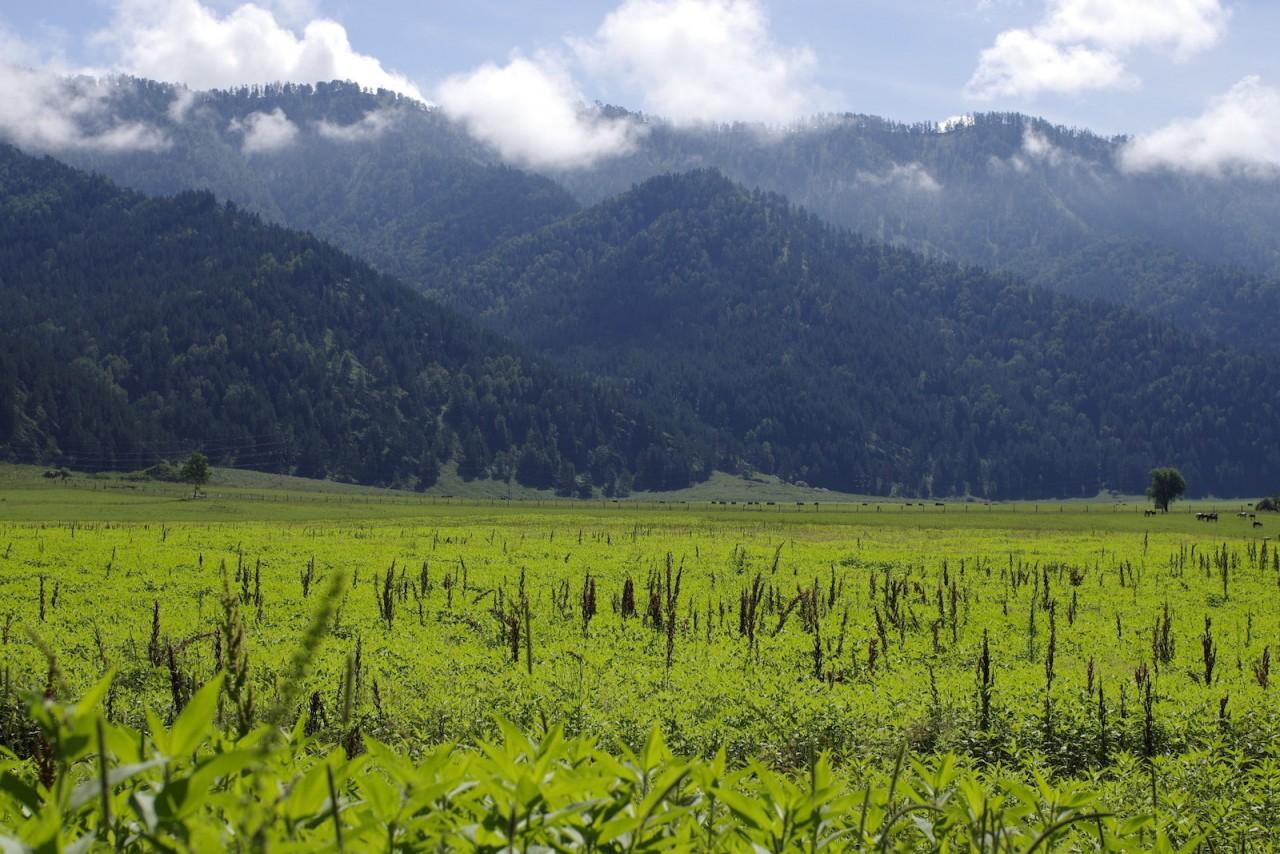 Алтайские горы. красота, природа, россия