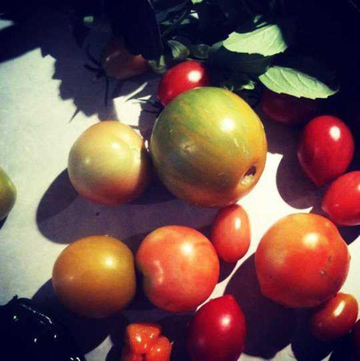 Садовые хитрости: 12 полезных советов