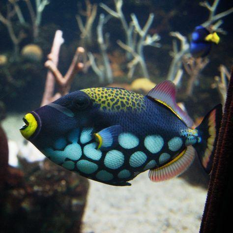 Самые красивые рыбы: название и фото рыб аквариум,наши любимцы,рыбы