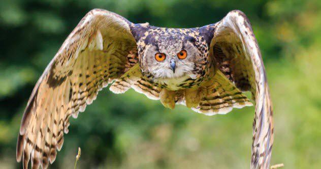 Как совы летают, не издавая ни звука загадки, природа