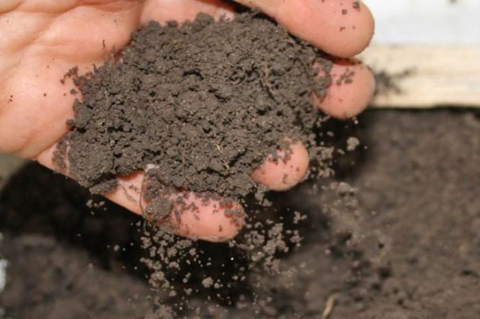 Шелуха делает почву рыхлой и воздухопроницаемой / Фото: domsadovnika.ru