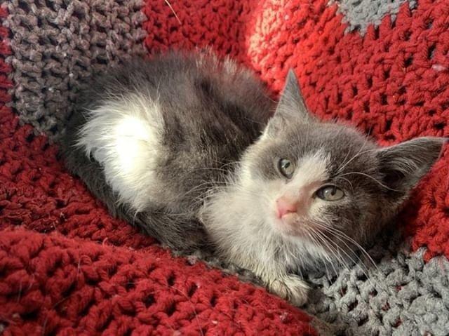 котенок на одеяле