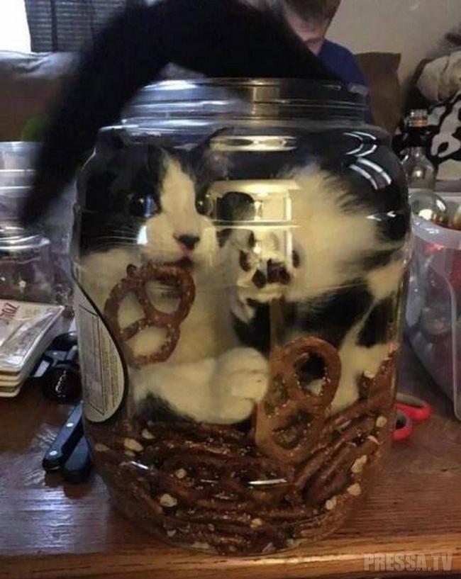 Никакого воспитания! Кошки и их чудные манеры