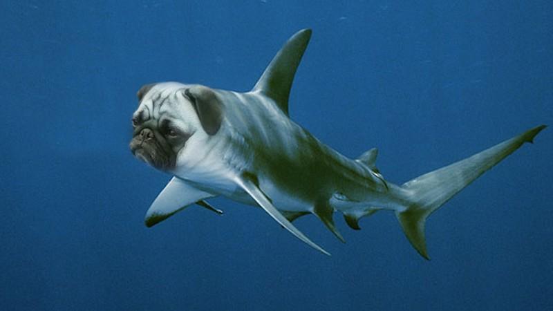 Рыба-маятник животные, прикол, юмор