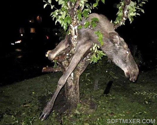 drunk_animals_6