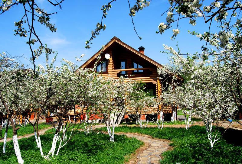 Картинки по запросу вишневый сад на даче