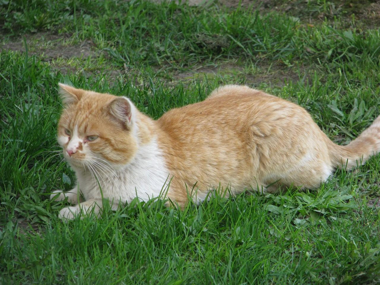 Братья наши меньшие: можно ли верить тому, что кошка лечит все болезни лучше стационара?