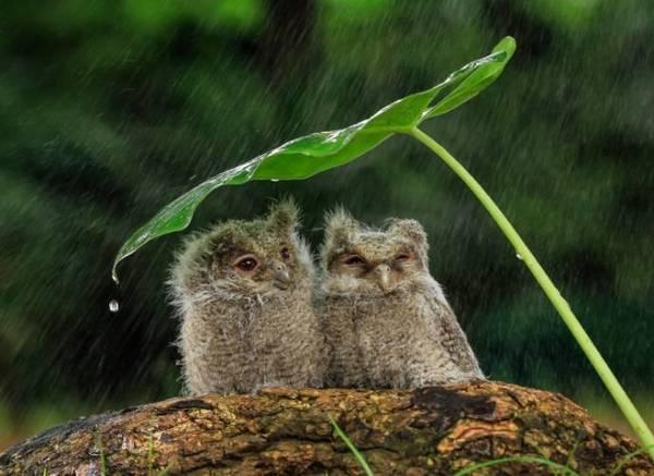 Очаровательные совята под листиком