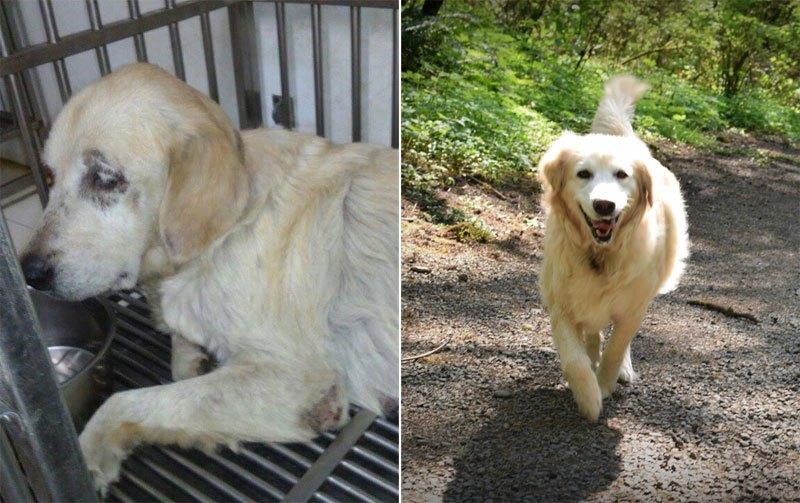 Бездомные собаки до и после обретения семьи