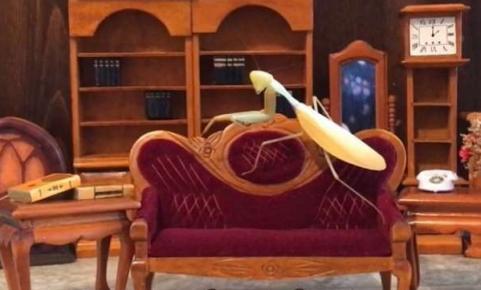 Богомол на диванчике