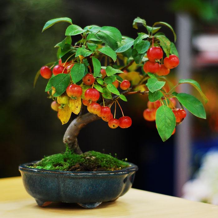 Искусство бонсай: 15 невероятно красивых мини-деревьев, созданных людьми