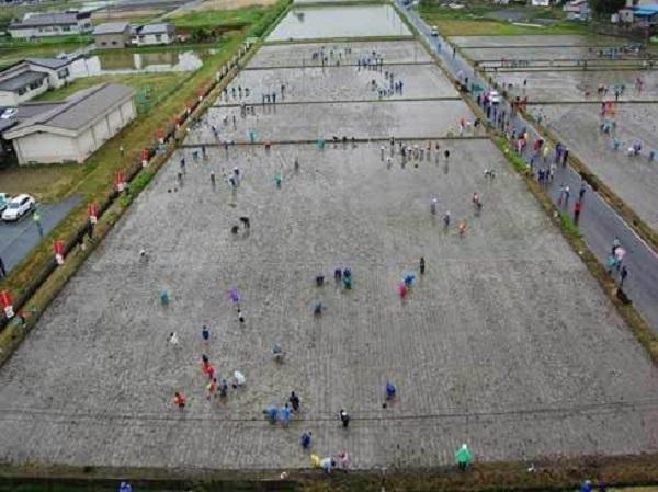 Они засеяли рисовое поле... Через 4 месяца все были шокированы, когда посмотрели на него сверху!