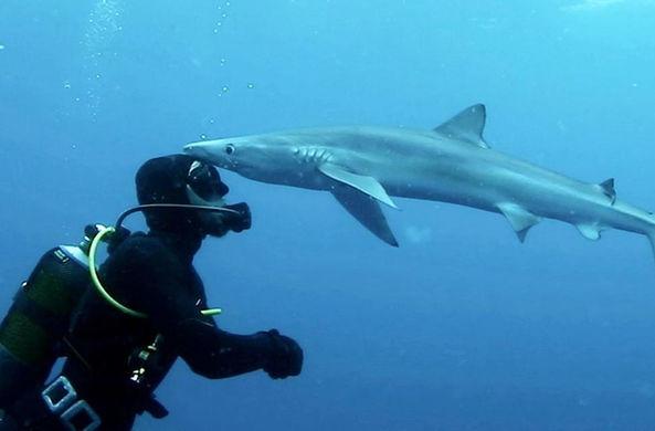 Дайвер получил от акулы поцелуй