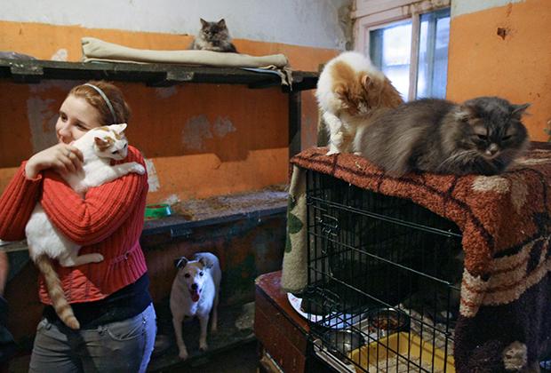 приют для животных спб вакансии