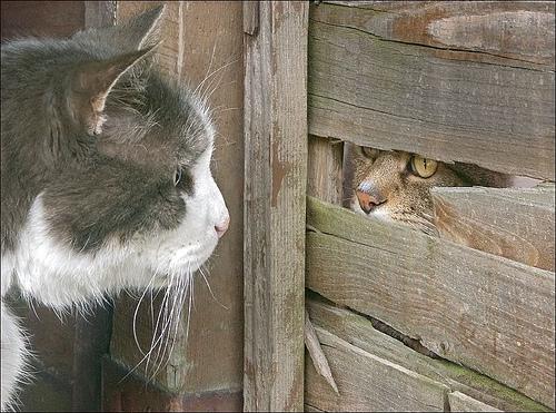 Такая вот сложная кошачья любовь))