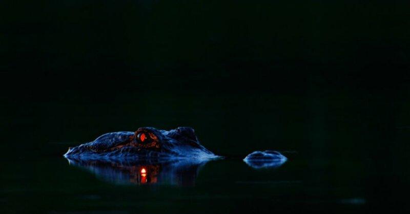 Жутчайшее зрелище, не правда ли? И такой кадр у Линча не один! животные, крокодилы, природа, фото