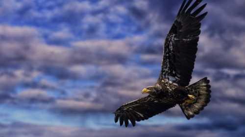 Румынский орёл кружит над Украиной    украина
