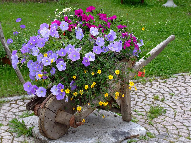 Красота своими руками. Примеры оформления цветочных клумб