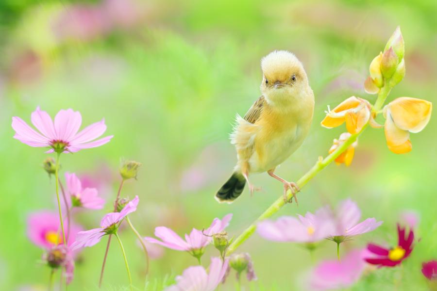 ~ act cute ~, автор — FuYi Chen на 500px.com