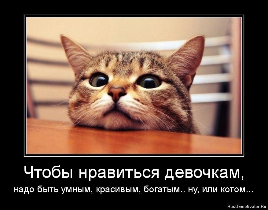Прикольные картинки демотиваторы с котами, самая счастливая потому