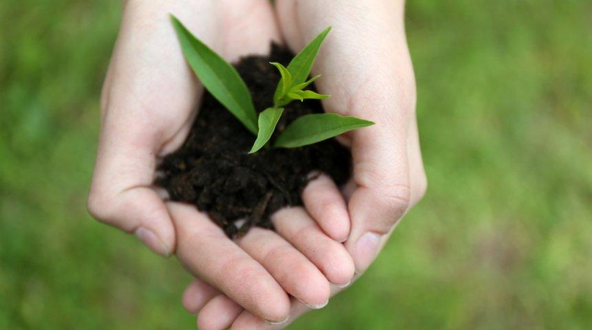 Гуматы что это такое и как применять удобрение, виды, состав