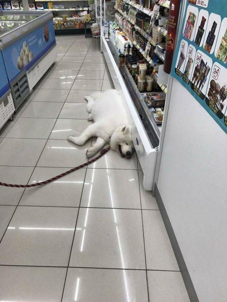 Устал от шопинга! настроение, позитив, юмор