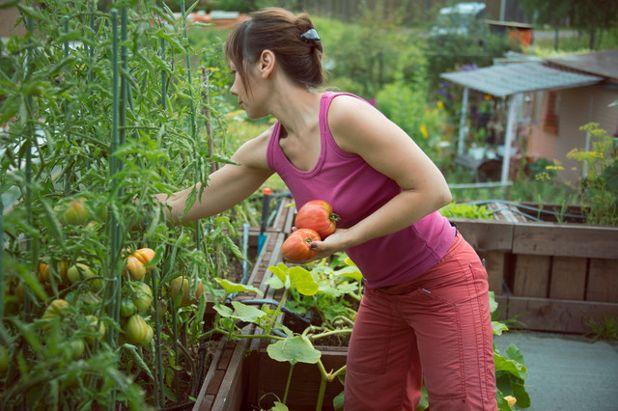 В гостях: Огород на крыше гаража в загородном доме