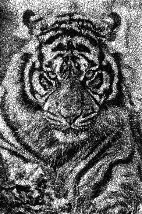 Тигр. Автор: Sergej Stoppel.
