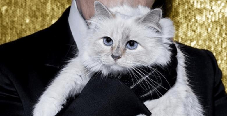 Кошка Карла Лагерфельда выпу…