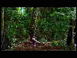 Hymn to the Rainforest (Sarah Brightman, Nella Fantasia)