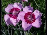 цветы жизни