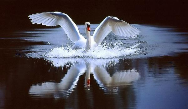 Расправь крылья и лети!