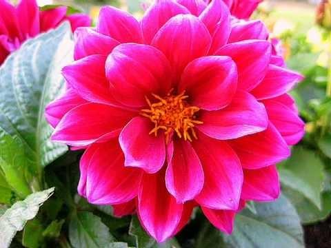 Симфония цветов и музыки