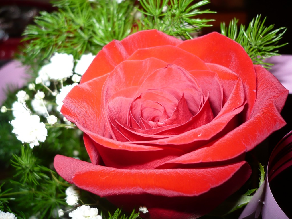 прибытию поздравление королева цветов узами брака