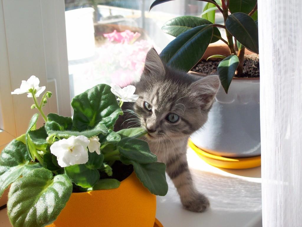 коты и цветы Huge
