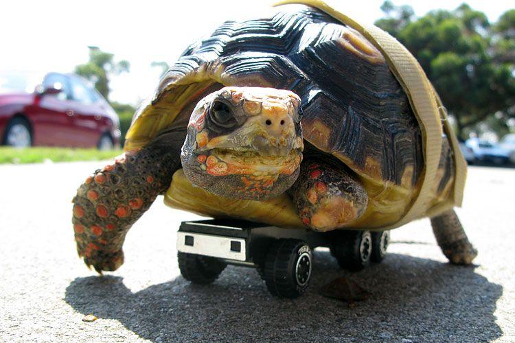 Смешная картинка про черепах, вырубкой