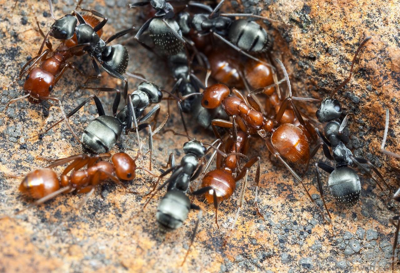 Когда в голове муравейник