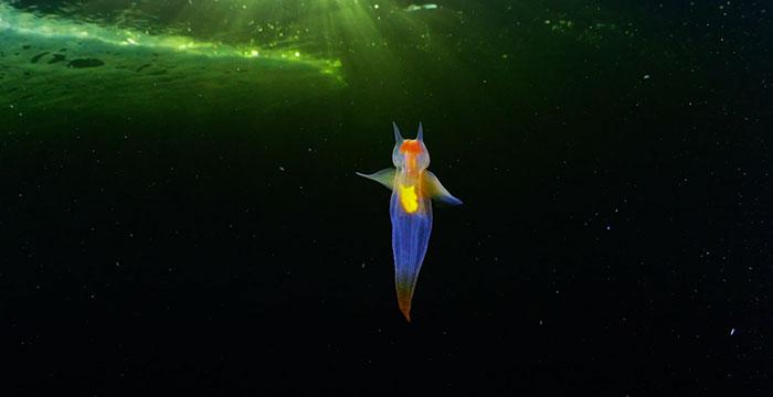 В морских глубинах нашли «ангела»: красивейшее видео