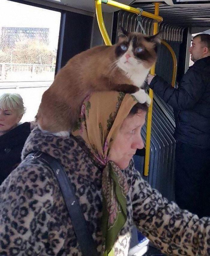 15 самых странных фото, когда-либо сделанных в троллейбусе