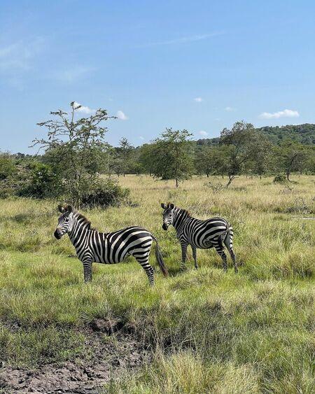 Сафари и много животных: Алекандра Бортич с мужем Евгением Савельевым путешествуют по Уганде Звезды,Звездные пары