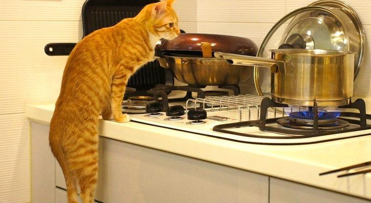 Кошка всегда способна доказа…