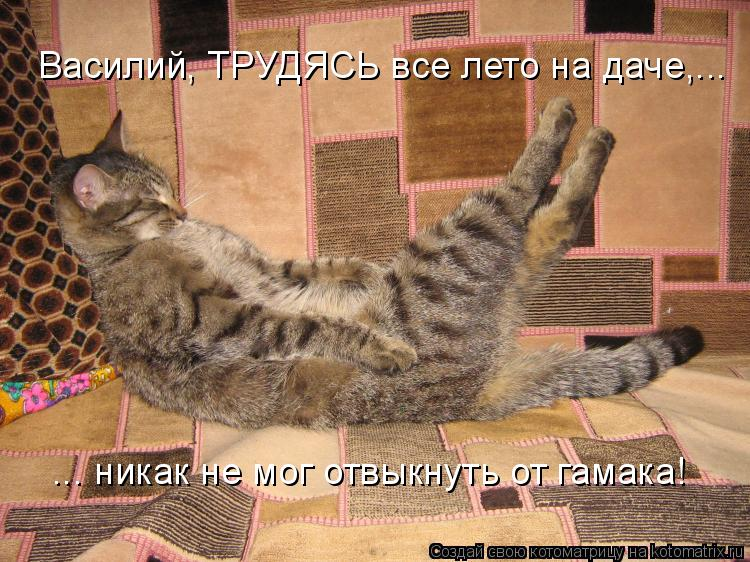 На дачах водятся коты вот такой красоты!