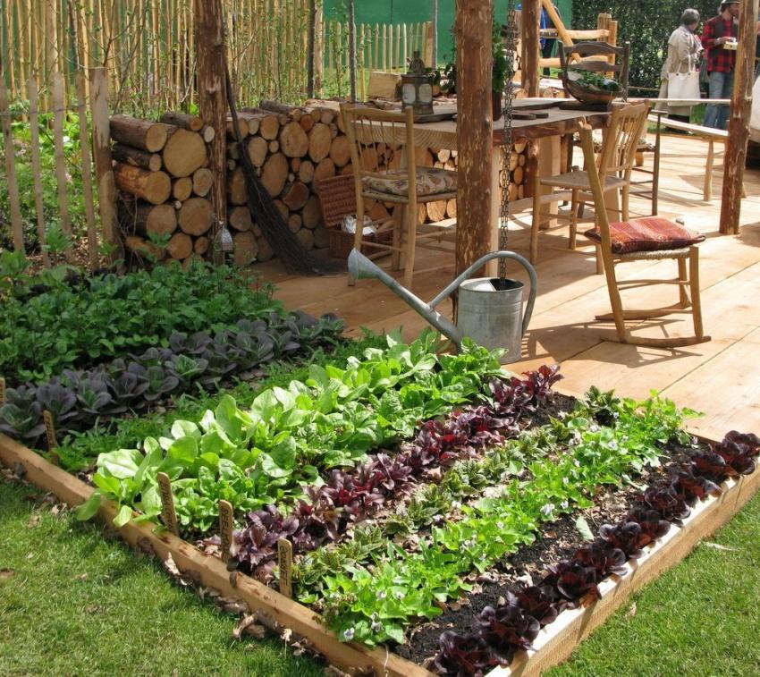 картинка красивого огорода