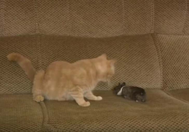 Кошка-мама обласкала маленьк…
